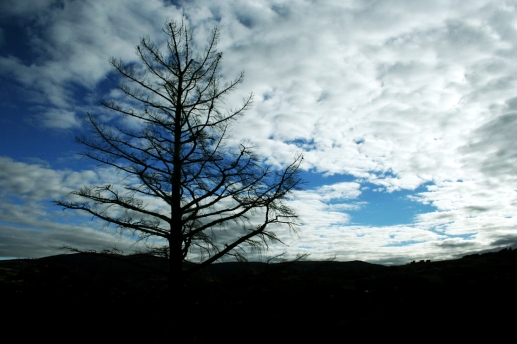 tree-dark